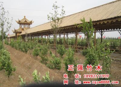 竹长廊 7