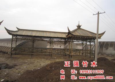 竹长廊 8