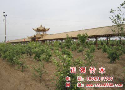 竹长廊 17